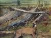 bruce-north_watercolor_august-buck-in-velvet