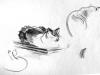 07-family-cats