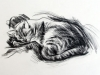 08-napping-cat