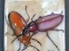 bug1-2008